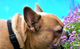 caine sniffer mirosind flori