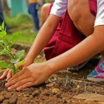 Plantarea unui rasad